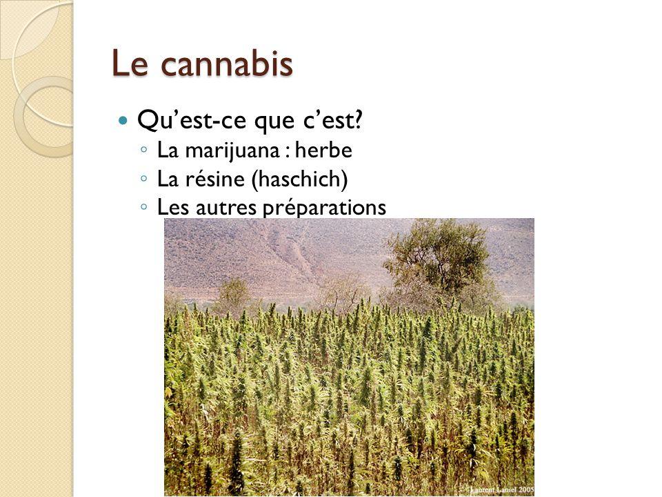 Le cannabis Quest-ce que cest? La marijuana : herbe La résine (haschich) Les autres préparations