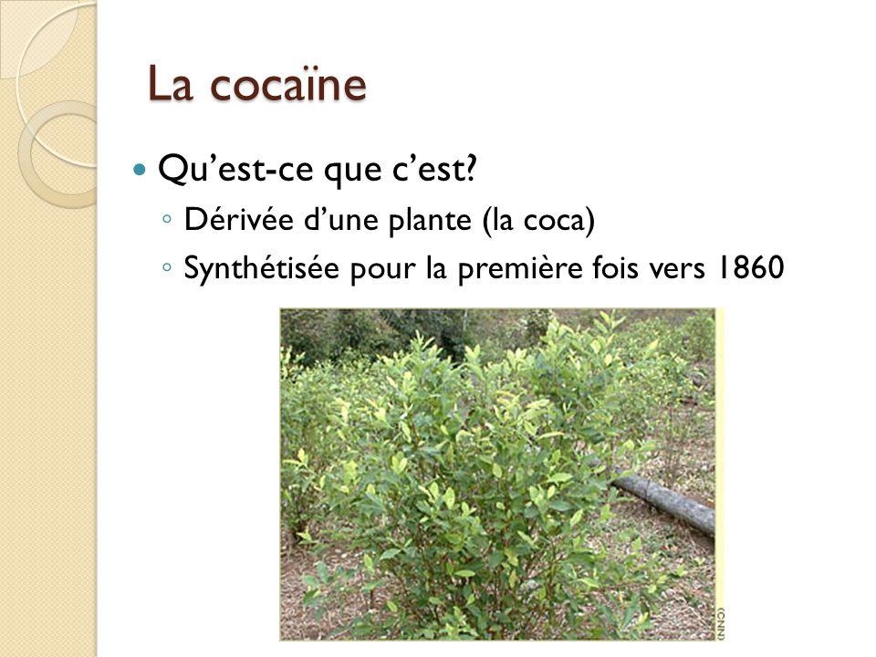 La cocaïne dans le monde Feuilles de cocaPâteBaseCocaïne 1 tonne (1000 kg) de feuilles de coca = 1 kg de cocaïne