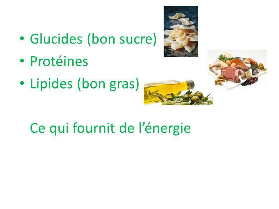 Glucides (bon sucre) Protéines Lipides (bon gras) Ce qui fournit de lénergie