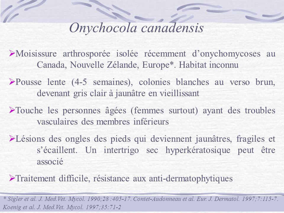 Onychocola canadensis Moisissure arthrosporée isolée récemment donychomycoses au Canada, Nouvelle Zélande, Europe*. Habitat inconnu Pousse lente (4-5