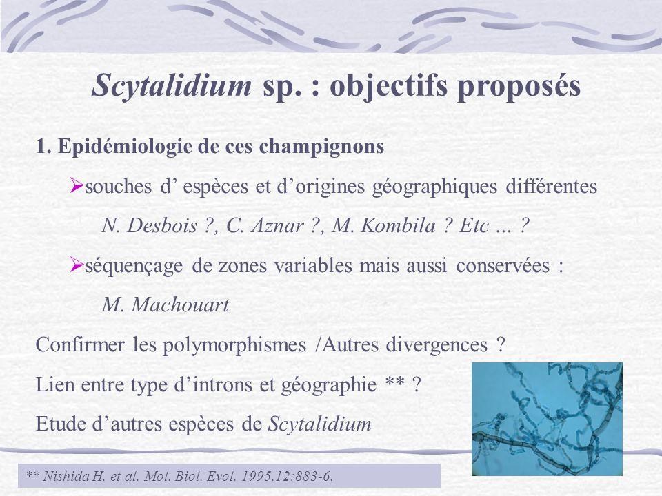 Scytalidium sp. : objectifs proposés 1. Epidémiologie de ces champignons souches d espèces et dorigines géographiques différentes N. Desbois ?, C. Azn