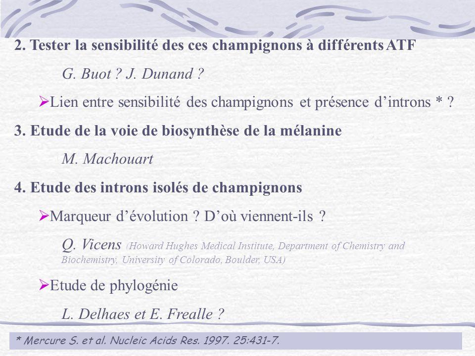 2. Tester la sensibilité des ces champignons à différents ATF G. Buot ? J. Dunand ? Lien entre sensibilité des champignons et présence dintrons * ? 3.