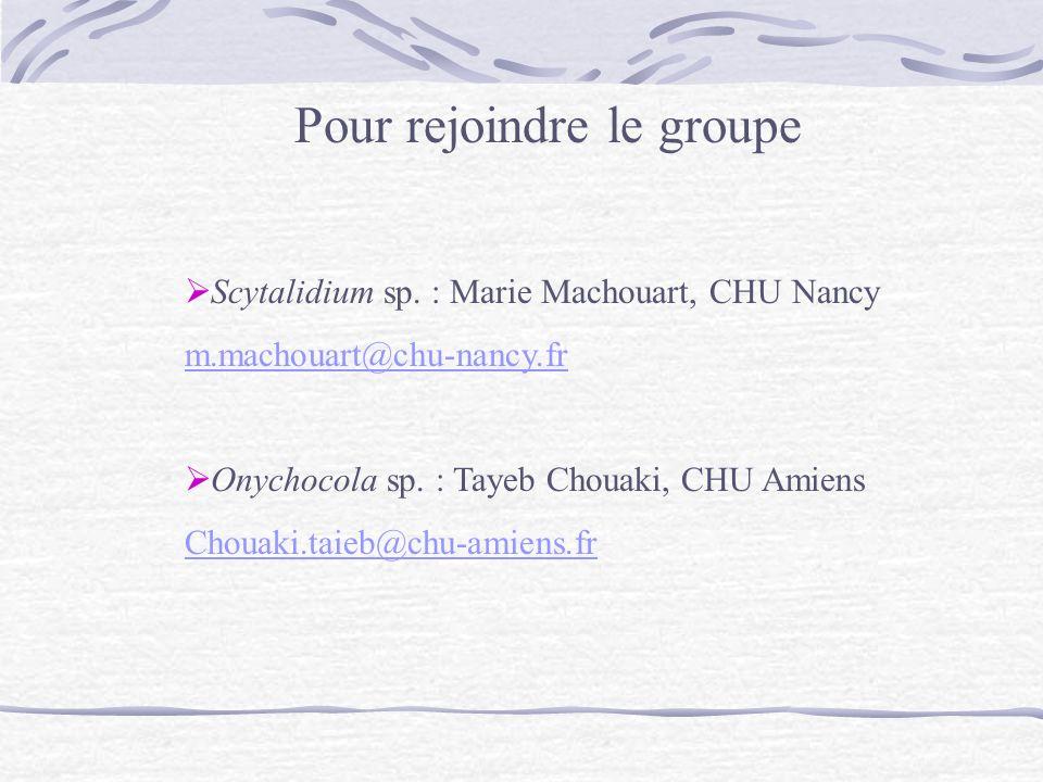 Pour rejoindre le groupe Scytalidium sp. : Marie Machouart, CHU Nancy m.machouart@chu-nancy.fr Onychocola sp. : Tayeb Chouaki, CHU Amiens Chouaki.taie
