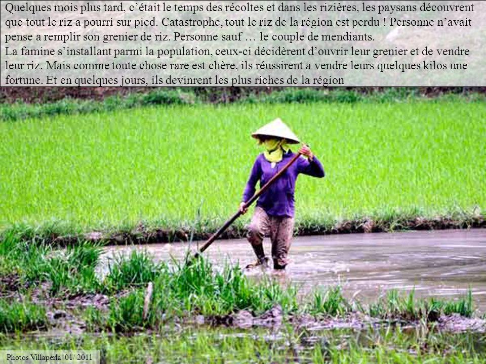 Au Vietnam, la sagesse populaire raconte que si on voit un jour dans un champ un buffle qui a de leau jusquau cou, cela signifie que la famine guette!