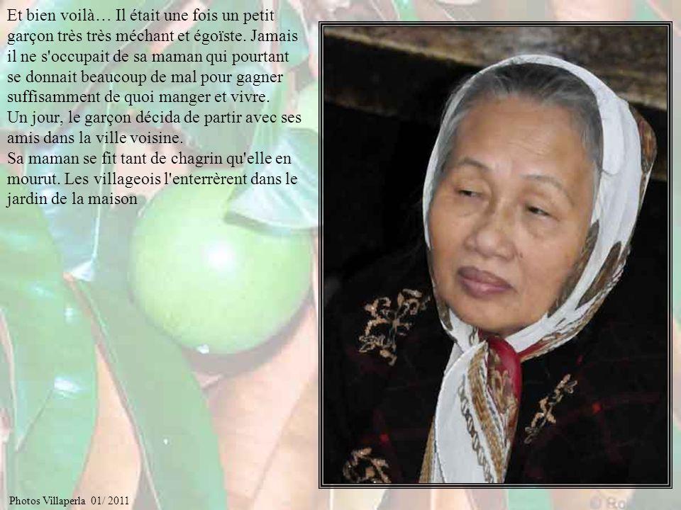 Raconte nous la légende du fruit laiteux, ou pomme de lait… Photos Villaperla 01/ 2011