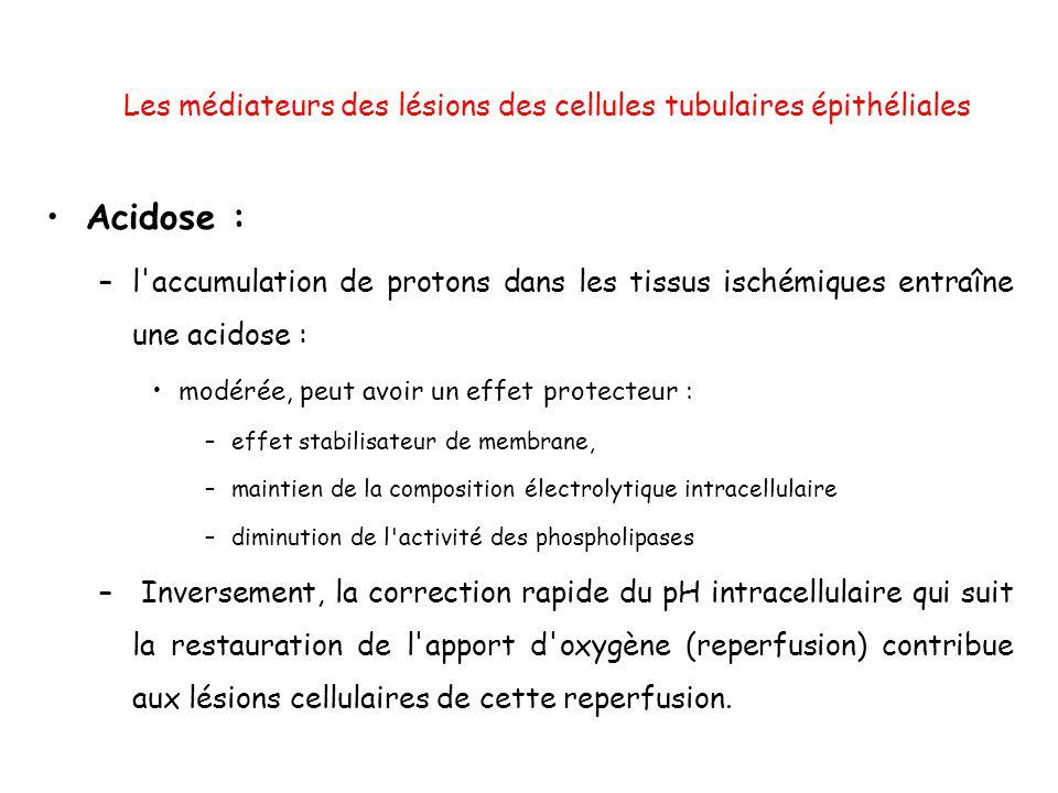 Les médiateurs des lésions des cellules tubulaires épithéliales Acidose : –l accumulation de protons dans les tissus ischémiques entraîne une acidose : modérée, peut avoir un effet protecteur : –effet stabilisateur de membrane, –maintien de la composition électrolytique intracellulaire –diminution de l activité des phospholipases – Inversement, la correction rapide du pH intracellulaire qui suit la restauration de l apport d oxygène (reperfusion) contribue aux lésions cellulaires de cette reperfusion.