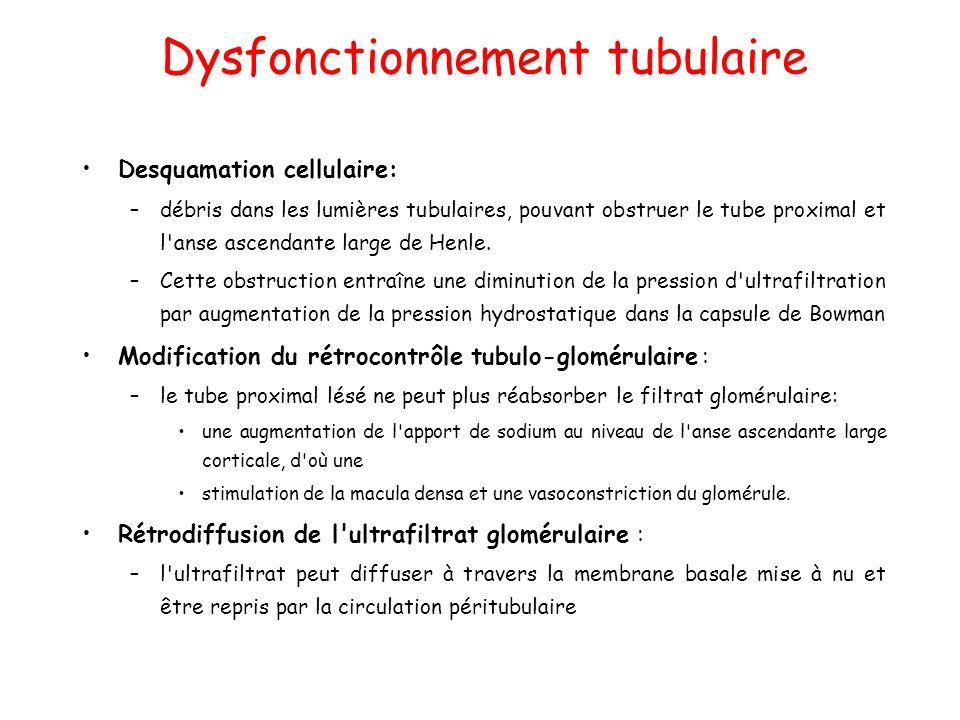 Dysfonctionnement tubulaire Desquamation cellulaire: –débris dans les lumières tubulaires, pouvant obstruer le tube proximal et l anse ascendante large de Henle.