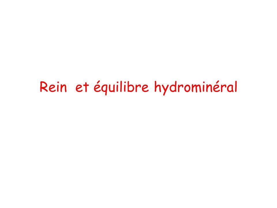 Rein et équilibre hydrominéral