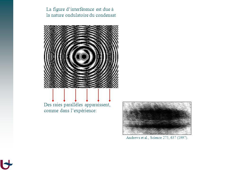 phase de la fonction donde du condensat Des raies parallèles apparaissent, comme dans lexpérience: Andrews et al., Science 275, 637 (1997). La figure