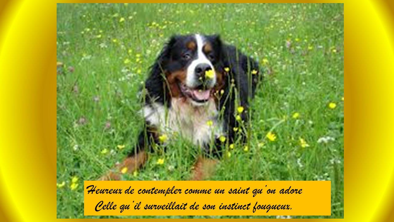 Dans le pré recouvert de fleurs multicolores Un chien était assis qui la couvait des yeux