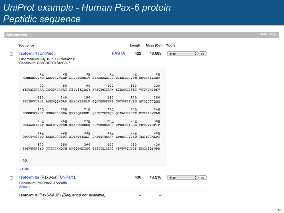 UniProt example - Human Pax-6 protein Peptidic sequence 29