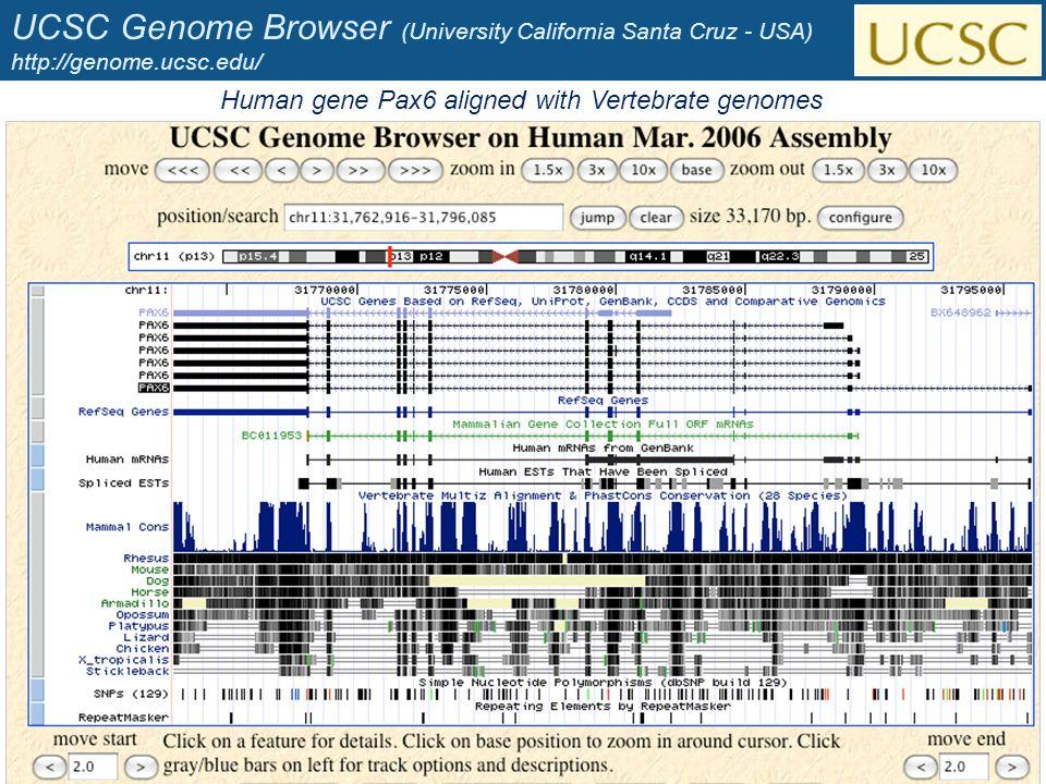 UCSC Genome Browser (University California Santa Cruz - USA) http://genome.ucsc.edu/ 36 Human gene Pax6 aligned with Vertebrate genomes