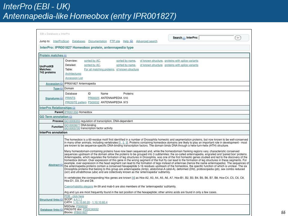 InterPro (EBI - UK) Antennapedia-like Homeobox (entry IPR001827) 55