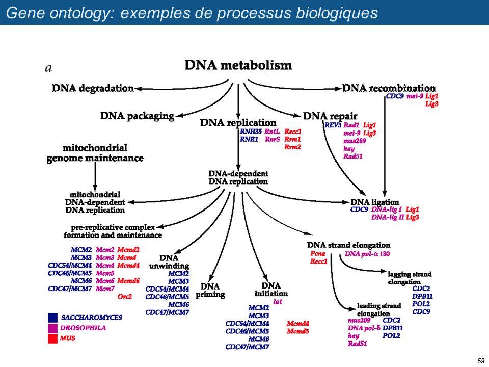Gene ontology: exemples de processus biologiques 59