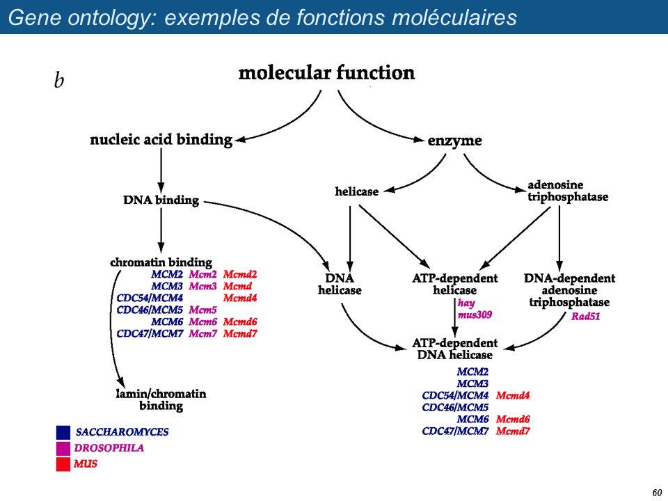 Gene ontology: exemples de fonctions moléculaires 60