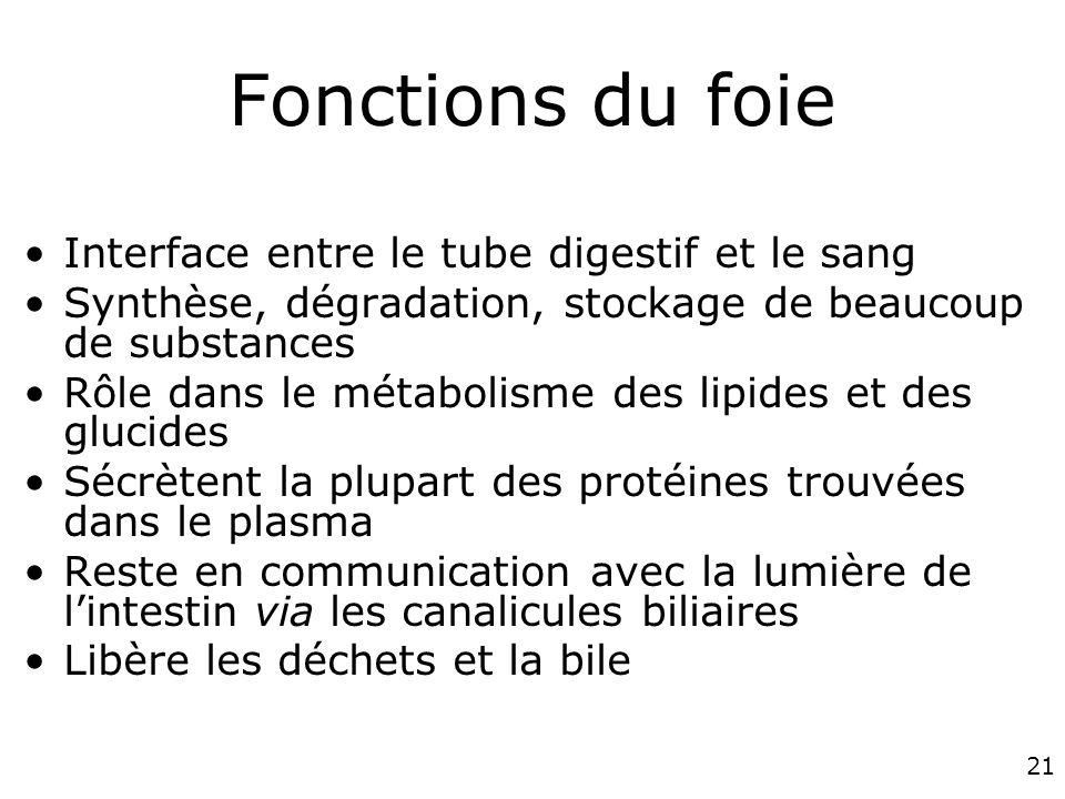 21 Fonctions du foie Interface entre le tube digestif et le sang Synthèse, dégradation, stockage de beaucoup de substances Rôle dans le métabolisme de