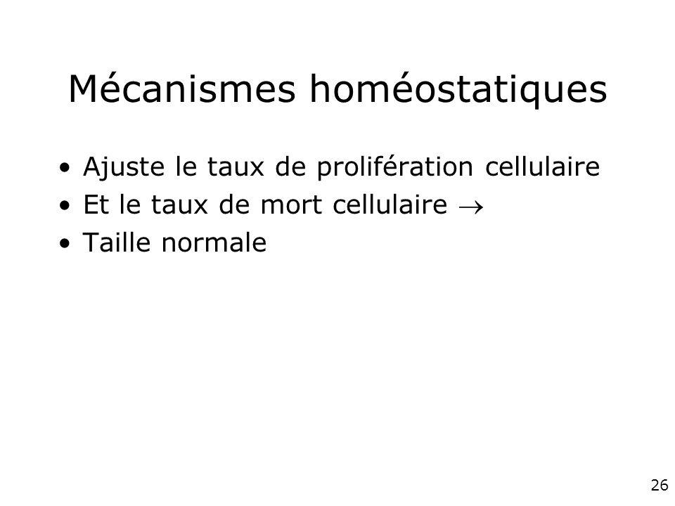 26 Mécanismes homéostatiques Ajuste le taux de prolifération cellulaire Et le taux de mort cellulaire Taille normale