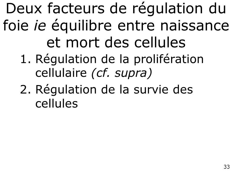 33 Deux facteurs de régulation du foie ie équilibre entre naissance et mort des cellules 1.Régulation de la prolifération cellulaire (cf. supra) 2.Rég