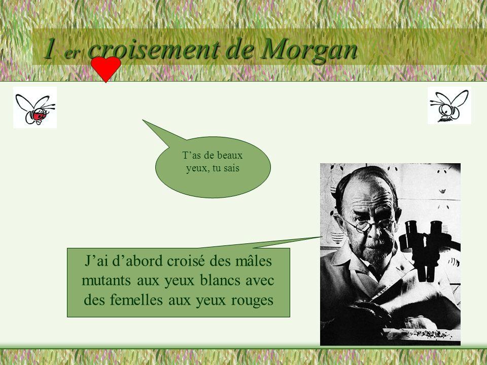 1 er croisement de Morgan (X + //X + ) (Y//X w ) Moi, je produis 2 types de gamètes