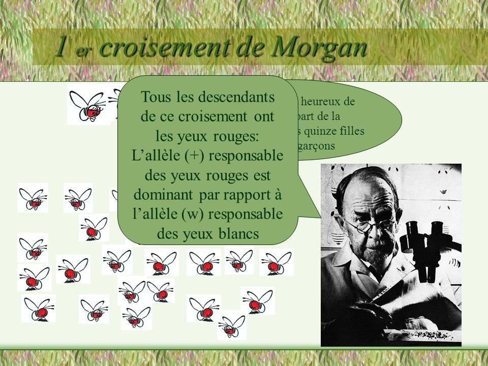 1 er croisement de Morgan (X R //X R ) (Y//X b ) Voyons ce que cela peut donner avec un échiquier de croisement
