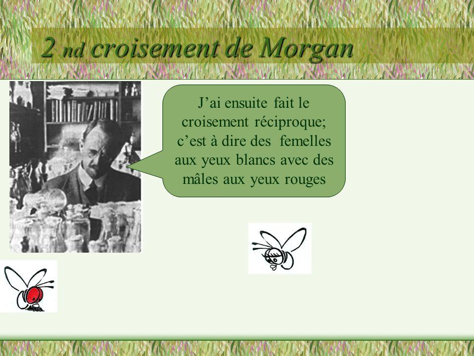 2 nd croisement de Morgan Cette fois, la première génération (F1) nest pas homogène