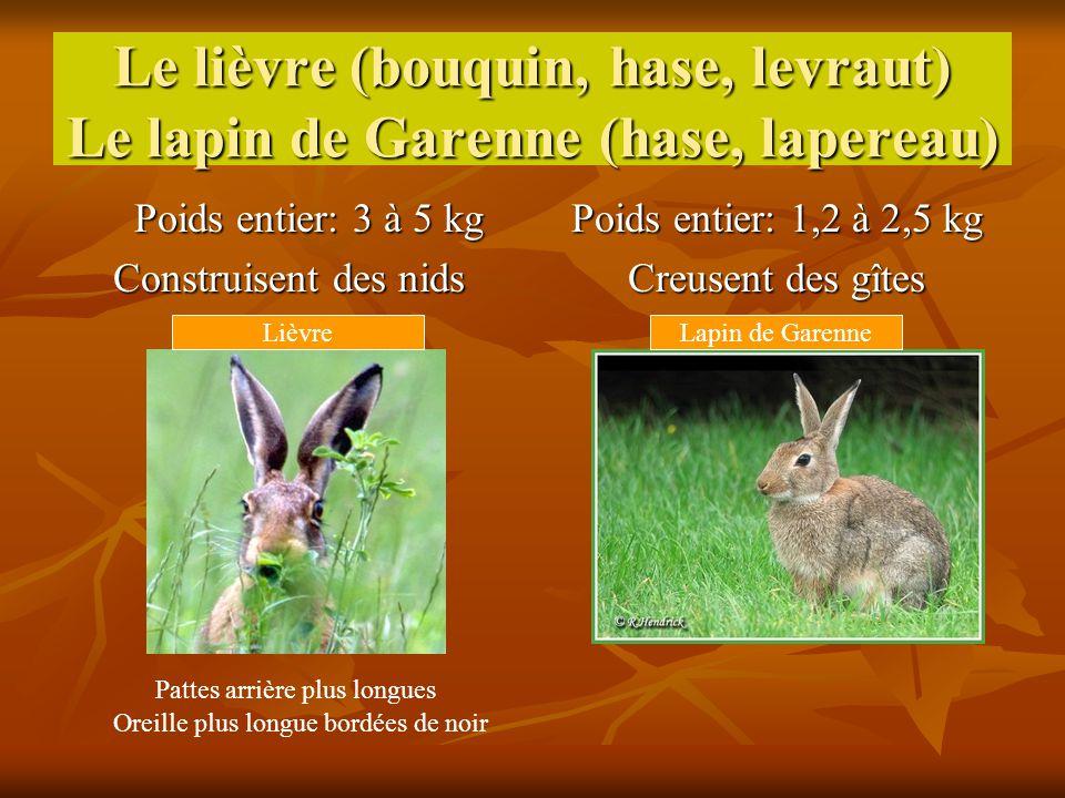 Le lièvre (bouquin, hase, levraut) Le lapin de Garenne (hase, lapereau) Poids entier: 3 à 5 kg Construisent des nids Poids entier: 1,2 à 2,5 kg Creuse