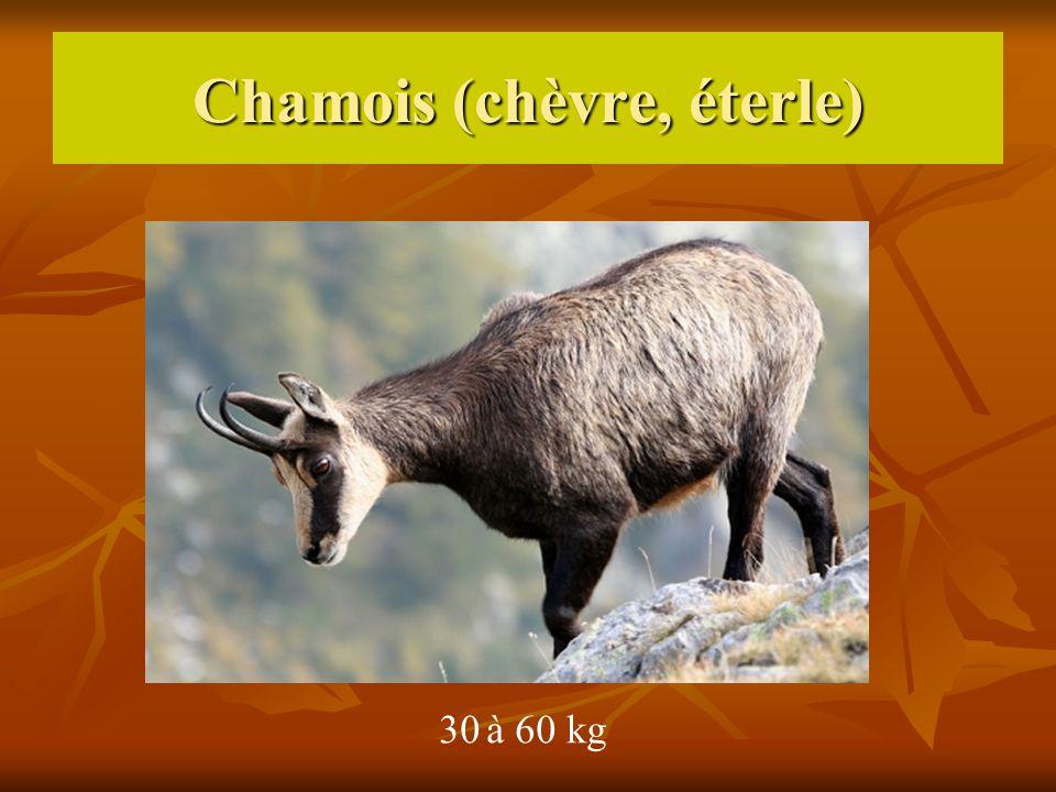 Chamois (chèvre, éterle) 30 à 60 kg