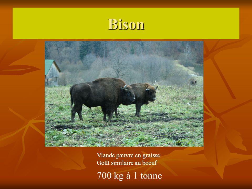 Bison 700 kg à 1 tonne Viande pauvre en graisse Goût similaire au boeuf