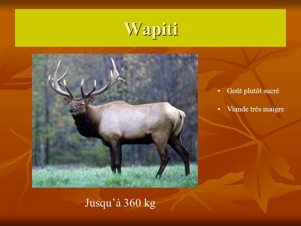 Wapiti Jusquà 360 kg Goût plutôt sucré Viande très maigre