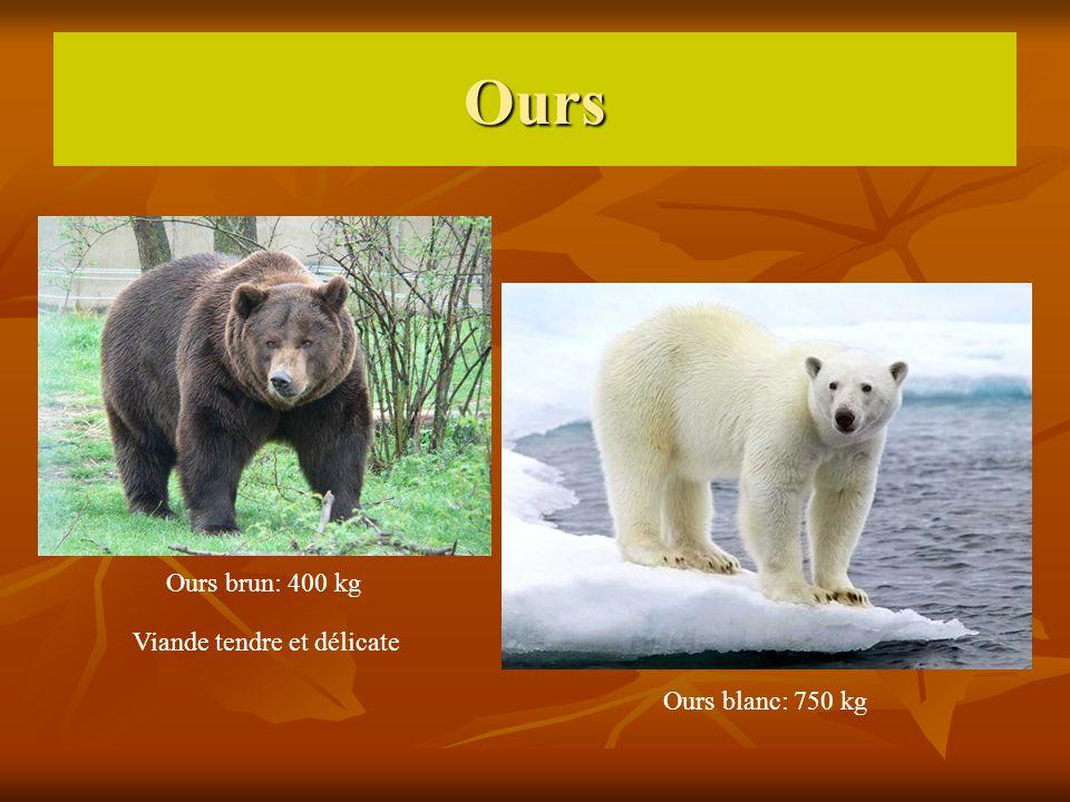 Ours Ours brun: 400 kg Ours blanc: 750 kg Viande tendre et délicate