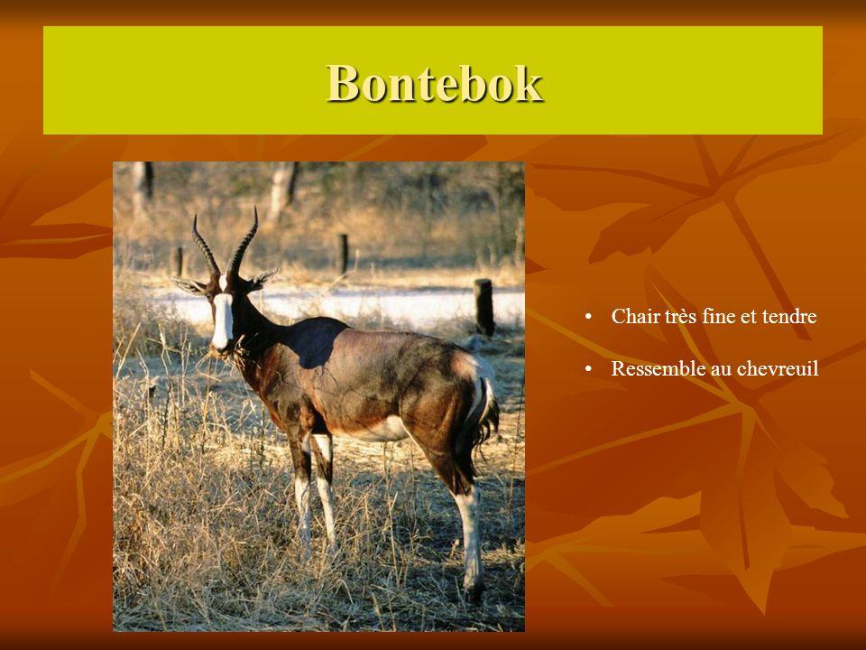 Bontebok Chair très fine et tendre Ressemble au chevreuil