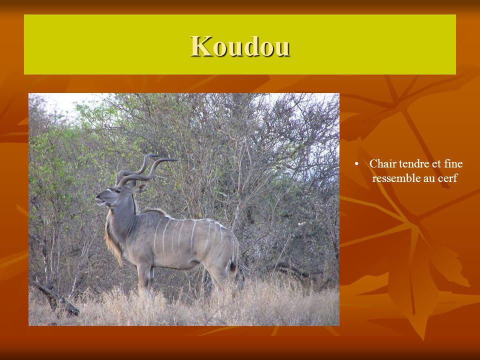 Koudou Chair tendre et fine ressemble au cerf