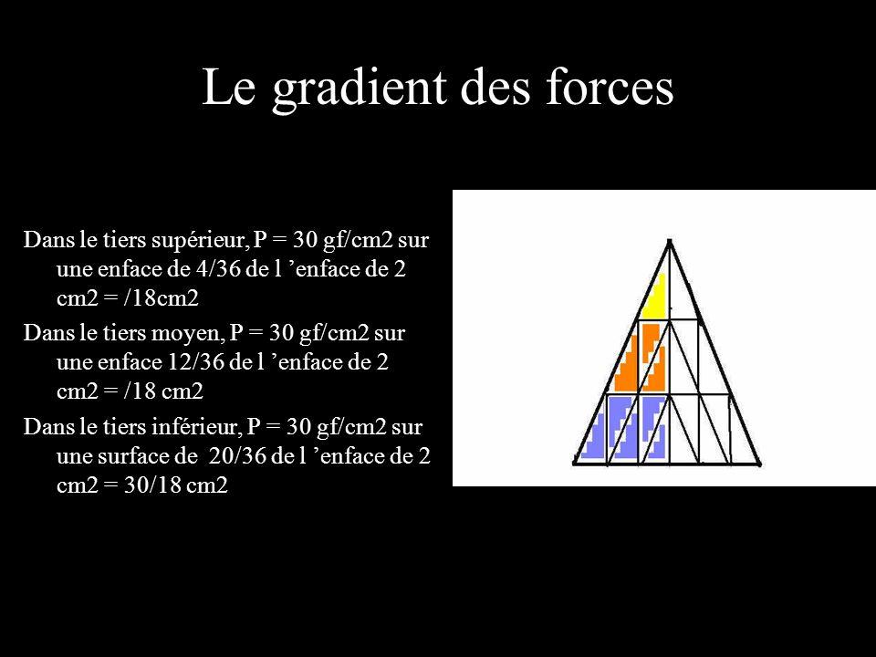 Le gradient des forces Dans le tiers supérieur, P = 30 gf/cm2 sur une enface de 4/36 de l enface de 2 cm2 = /18cm2 Dans le tiers moyen, P = 30 gf/cm2 sur une enface 12/36 de l enface de 2 cm2 = /18 cm2 Dans le tiers inférieur, P = 30 gf/cm2 sur une surface de 20/36 de l enface de 2 cm2 = 30/18 cm2
