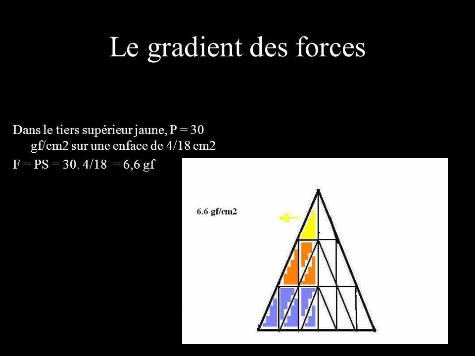 Le gradient des forces Dans le tiers supérieur jaune, P = 30 gf/cm2 sur une enface de 4/18 cm2 F = PS = 30.