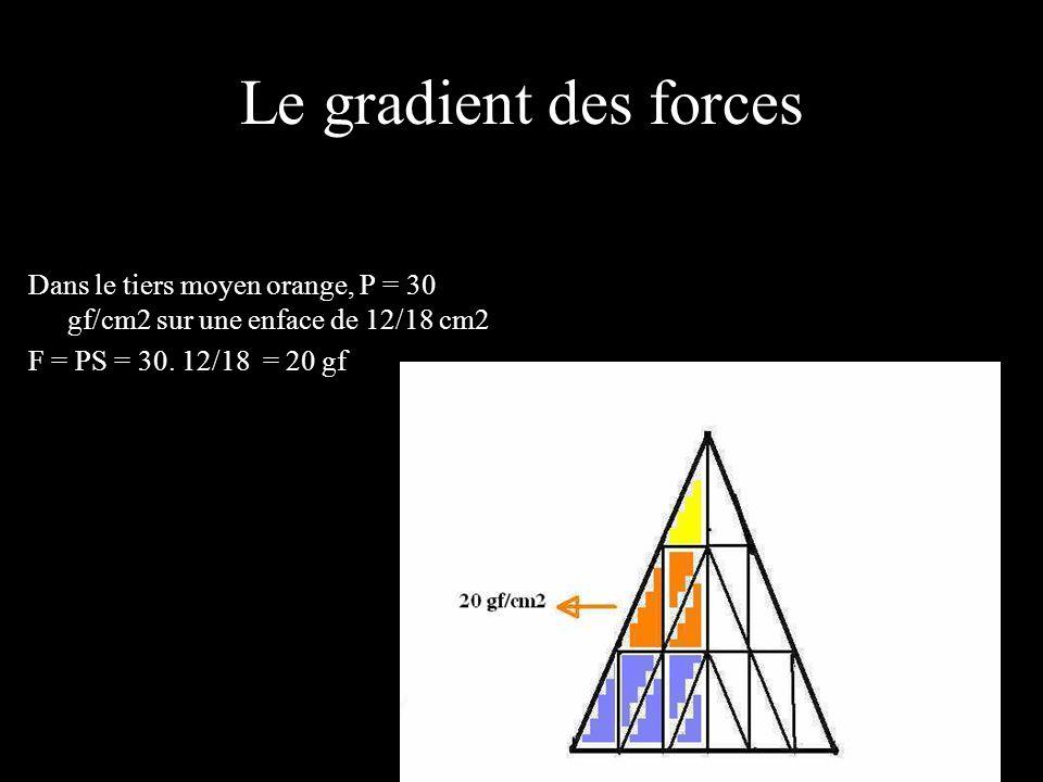 Le gradient des forces Dans le tiers moyen orange, P = 30 gf/cm2 sur une enface de 12/18 cm2 F = PS = 30.