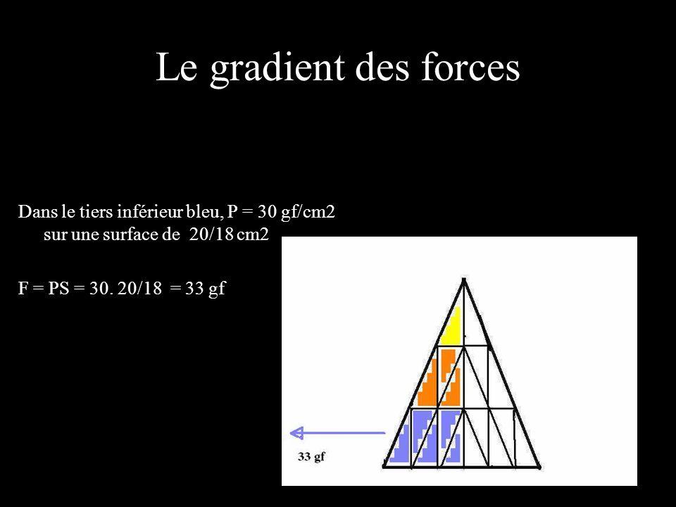Le gradient des forces Dans le tiers inférieur bleu, P = 30 gf/cm2 sur une surface de 20/18 cm2 F = PS = 30.