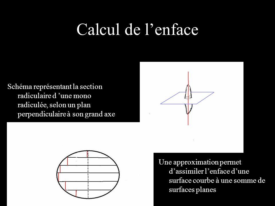 Calcul de lenface Schéma représentant la section radiculaire d une mono radiculée, selon un plan perpendiculaire à son grand axe Une approximation permet dassimiler lenface dune surface courbe à une somme de surfaces planes