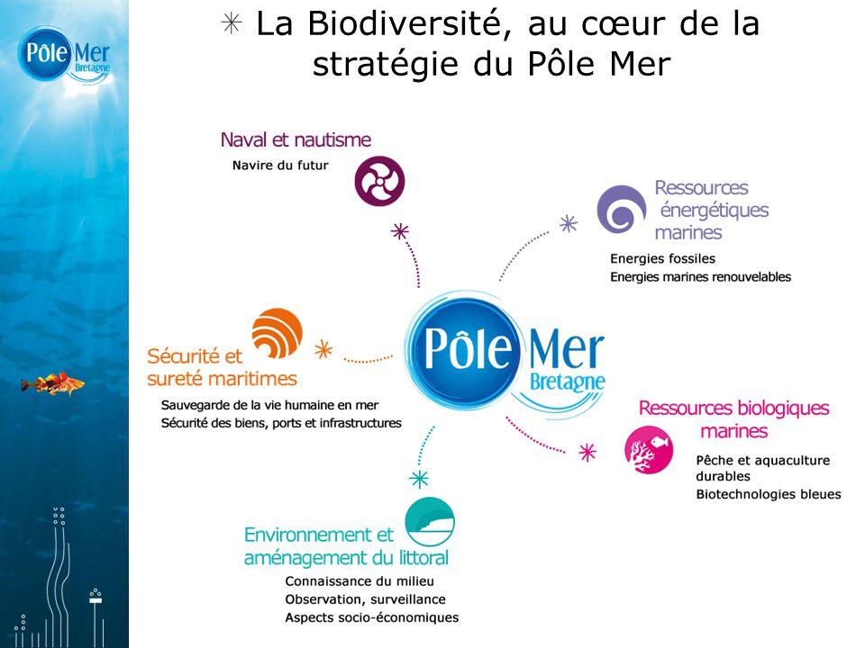La Biodiversité, au cœur de la stratégie du Pôle Mer