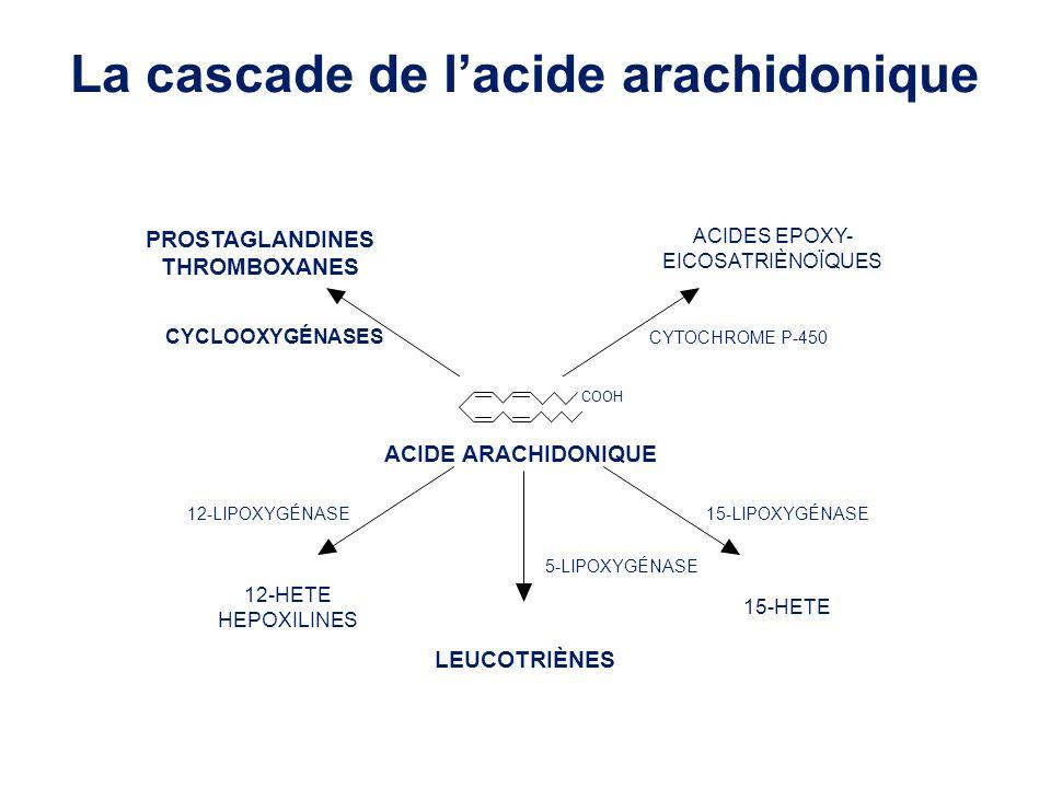 COOH ACIDE ARACHIDONIQUE LEUCOTRIÈNES PROSTAGLANDINES THROMBOXANES ACIDES EPOXY- EICOSATRIÈNOÏQUES 15-HETE 12-HETE HEPOXILINES CYCLOOXYGÉNASES 5-LIPOXYGÉNASE 12-LIPOXYGÉNASE15-LIPOXYGÉNASE CYTOCHROME P-450 La cascade de lacide arachidonique
