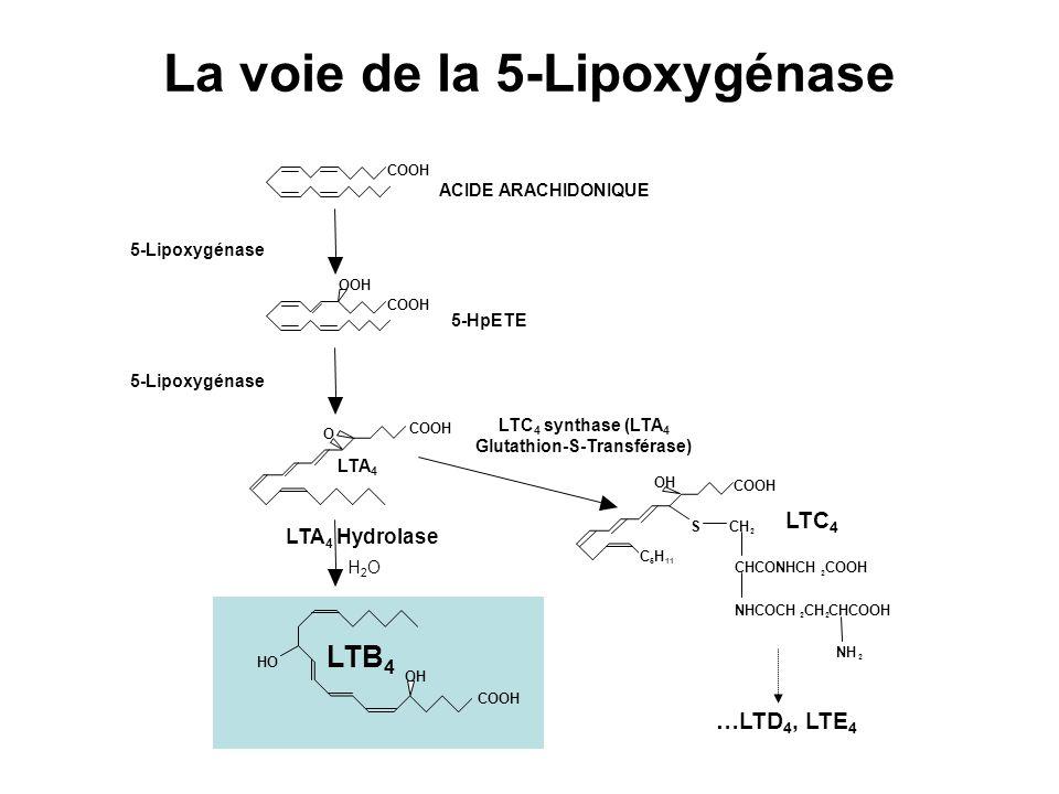 COOH OOH O COOH OH COOH HO OH C 5 H 11 SCH 2 COOH CHCONHCH 2 COOH NHCOCH 2 CH 2 CHCOOH NH 2 LTA 4 LTC 4 ACIDE ARACHIDONIQUE 5-HpETE 5-Lipoxygénase LTC 4 synthase (LTA 4 Glutathion-S-Transférase) H2OH2O LTB 4 La voie de la 5-Lipoxygénase LTA 4 Hydrolase …LTD 4, LTE 4 5-Lipoxygénase