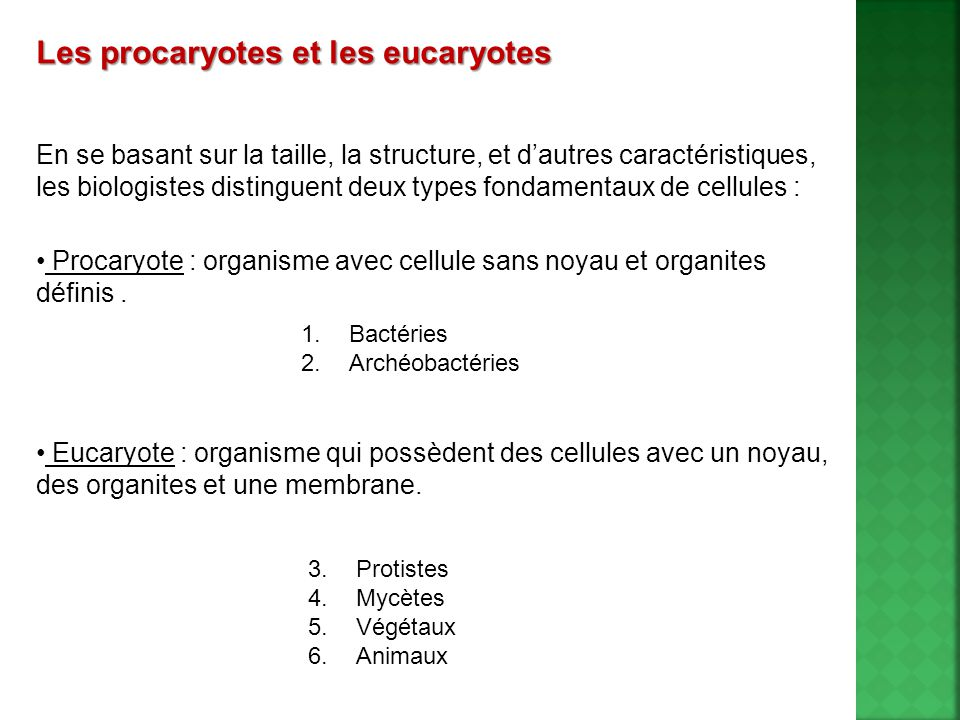 Les procaryotes et les eucaryotes En se basant sur la taille, la structure, et dautres caractéristiques, les biologistes distinguent deux types fondamentaux de cellules : Procaryote : organisme avec cellule sans noyau et organites définis.