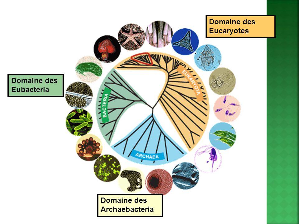 Domaine des Eubacteria Domaine des Archaebacteria Domaine des Eucaryotes