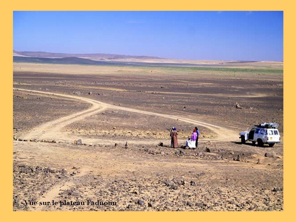 Site de Dider (vache préhistorique)