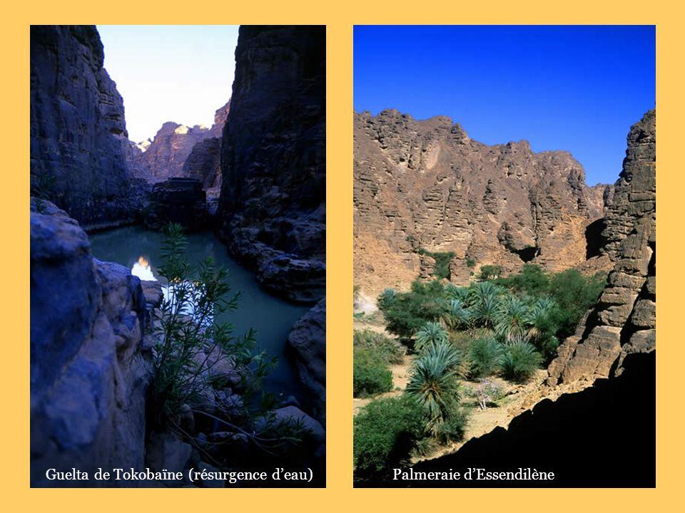 Guelta de Tokobaïne (résurgence deau)Palmeraie dEssendilène