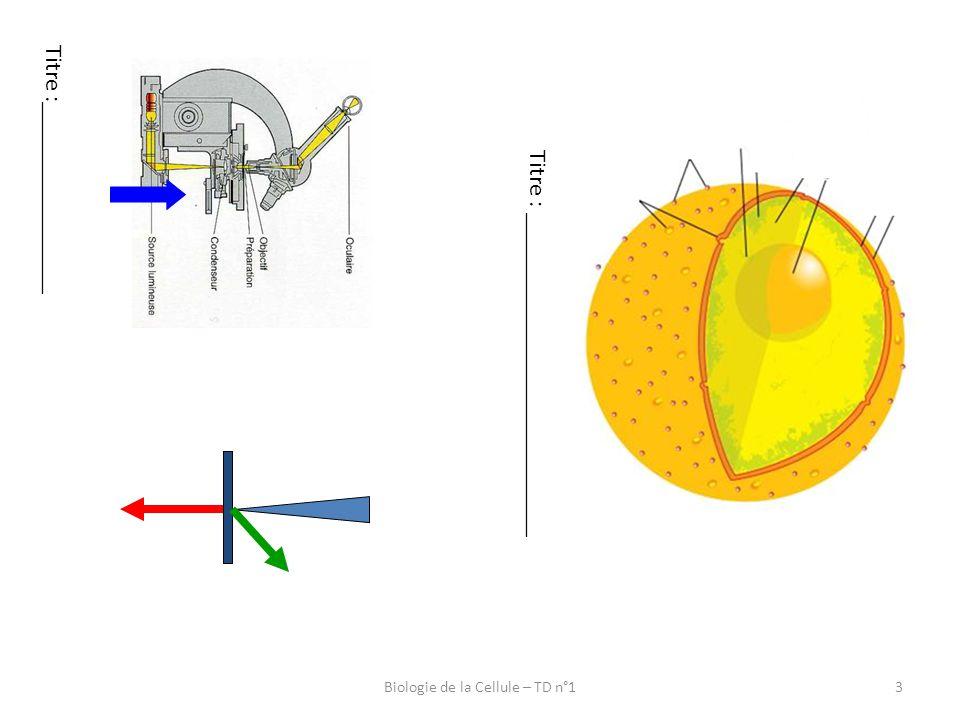 4 Microscopie électronique à transmission : Ombrage