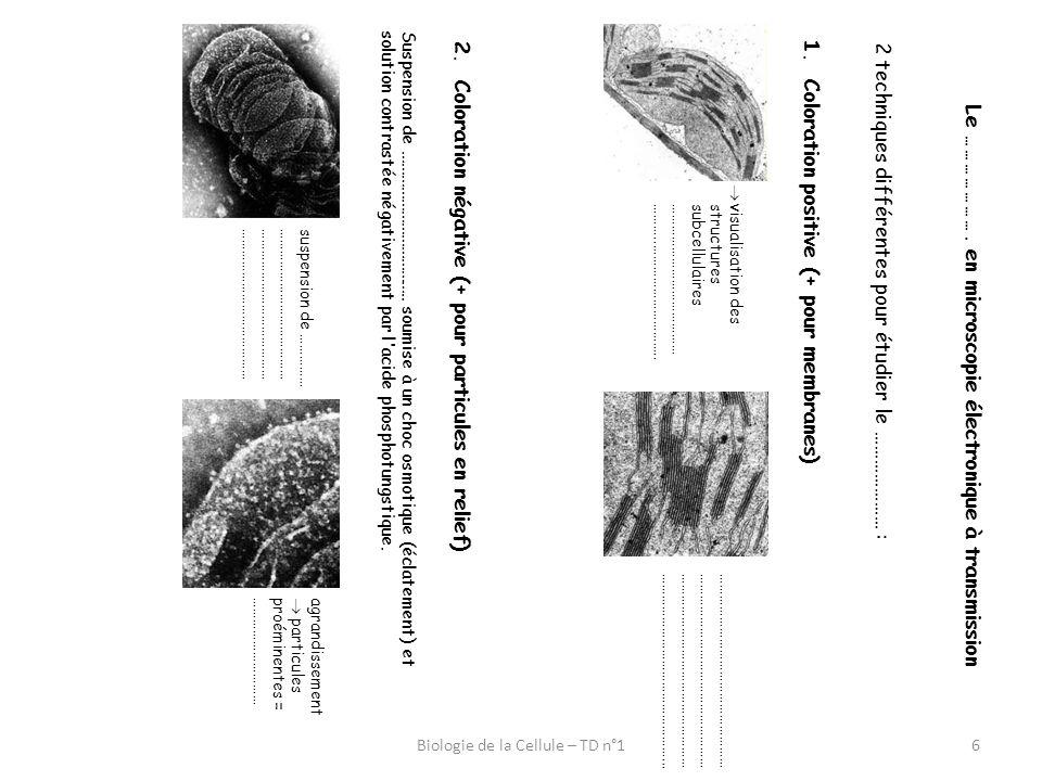 6 Le …………………. en microscopie électronique à transmission 2 techniques différentes pour étudier le ………………… : 1.Coloration positive (+ pour membranes) v