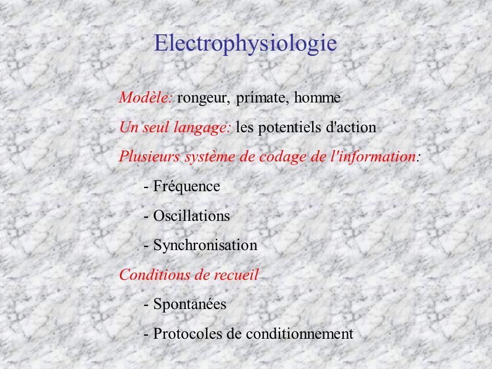 1.Des augmentations localisées d activité synaptiques augmentent la consommation d oxygène.