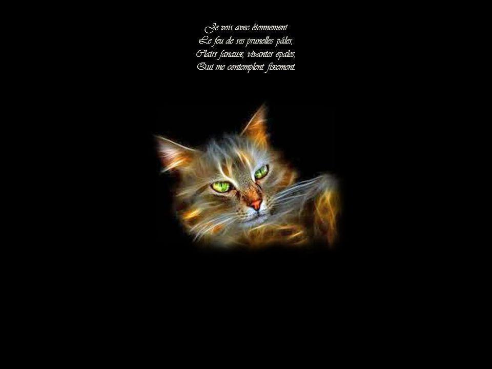 Quand mes yeux, vers ce chat que j'aime Tirés comme par un aimant Se retournent docilement Et que je regarde en moi-même