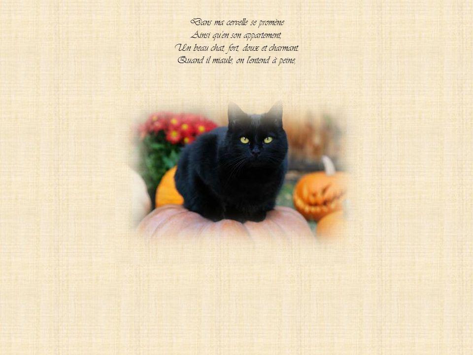 Dans ma cervelle se promène Ainsi qu en son appartement, Un beau chat, fort, doux et charmant.