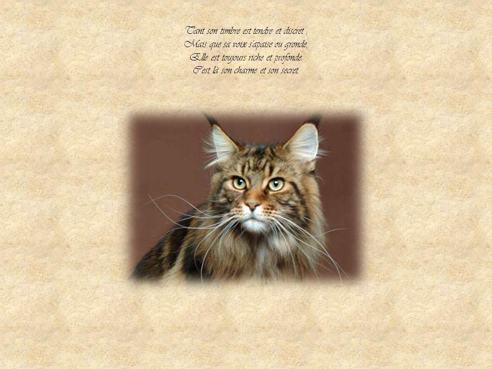 Dans ma cervelle se promène Ainsi qu'en son appartement, Un beau chat, fort, doux et charmant. Quand il miaule, on l'entend à peine,